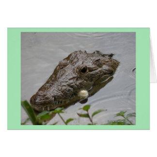 Crocodilo no cartão vazio de Belize