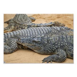 Crocodilos Arte De Fotos