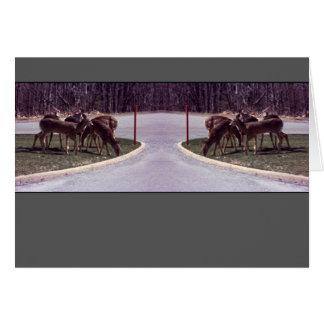 Cruzamento dos cervos - cartão