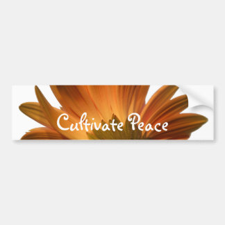Cultive a paz adesivo para carro