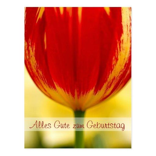 Cumprimento alemão do aniversário da tulipa vermel cartão postal