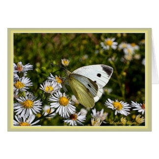 Cumprimento da borboleta: Cartão