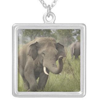 Cumprimento elefante indiano/asiático, Corbett Colar Com Pendente Quadrado