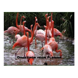 """""""Cumprimentos de Florida,"""" cartão dos flamingos"""