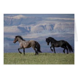 Custer e galáxia - cartão do cavalo selvagem