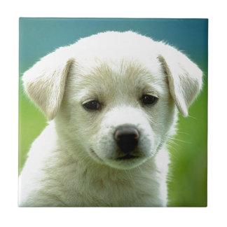 cute-puppy-dog-wallpapers.jpg