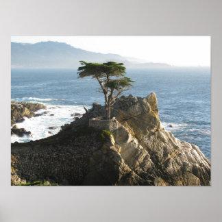 Cypress solitário na movimentação de 17 milhas poster