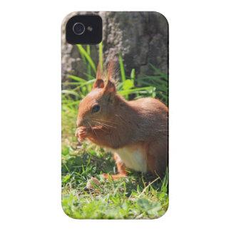 Da amora-preta bonito vermelha da foto do esquilo capinha iPhone 4
