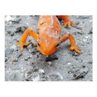 Da salamandra cartão próximo acima
