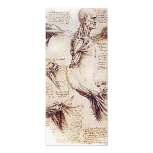 da Vinci -- Esboço do ombro Panfletos Informativos
