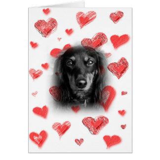 Dachshund com o cartão vermelho dos corações