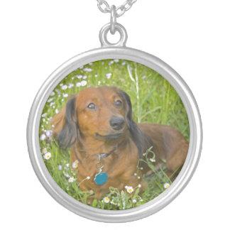 dachshund de cabelos compridos colar com pendente redondo