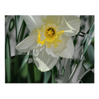 Daffodil 2015 cartão postal
