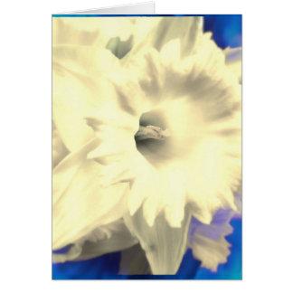 Daffodil branco com o cartão azul do vazio do fogo