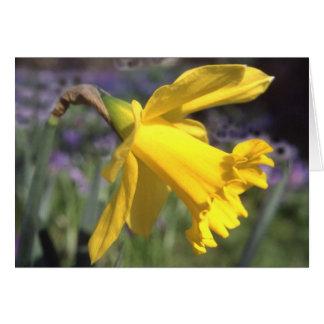Daffodil - cartão de cumprimentos vazio