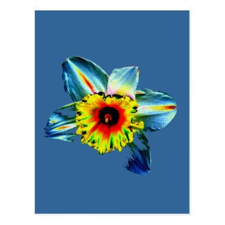 Daffodil de néon colorido cartão postal