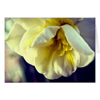 Daffodil do narciso cartão comemorativo