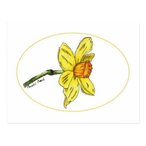 Daffodil (narciso) cartão postal