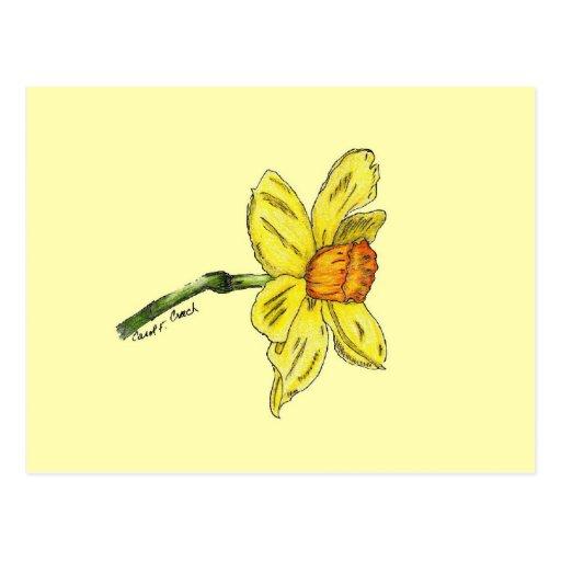 Daffodil (narciso) cartao postal