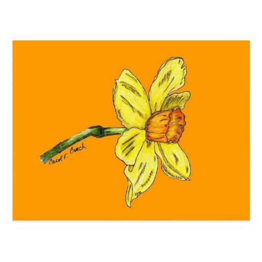 Daffodil (narciso) cartoes postais
