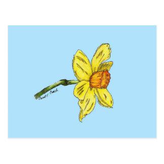 Daffodil narciso cartão postal