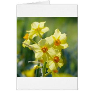 Daffodils bonito, narciso 03,1 cartão comemorativo
