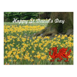 Daffodils do dia de St David Cartão Postal
