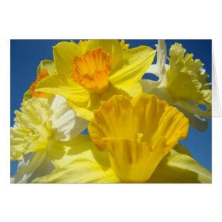 Daffodils dos cartões das flores dos Daffodils do