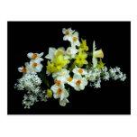 Daffodils e Lilacs Cartão Postal