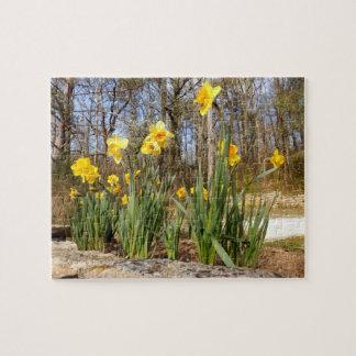 Daffodils no quebra-cabeça da foto da páscoa com