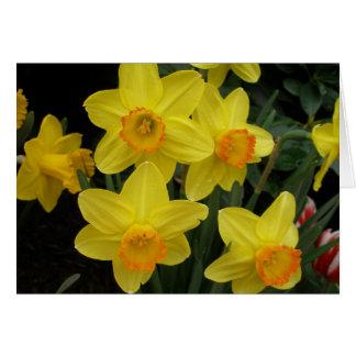 Daffodils todo o cartão da ocasião