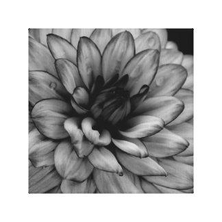 Dália da flor