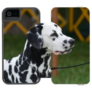 Dalmatian adorável