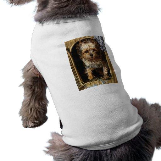 Darby um impressão do yorkshire terrier roupas para caes