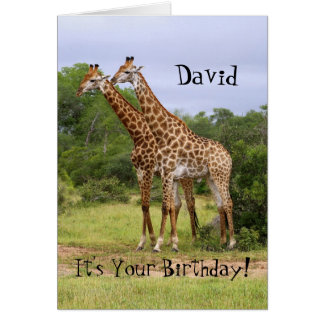 """David """"vai"""" cartão selvagem dos girafas do feliz a"""