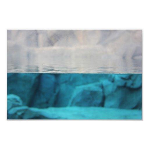 """De """"perspectiva"""" 12x8 do leão mar impressão de fotos"""