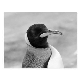 """De """"pinguim imperador """" cartões postais"""