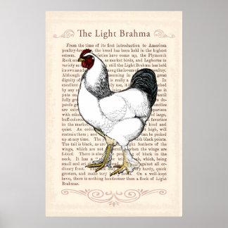 Decoração do vintage da cozinha do país da galinha poster