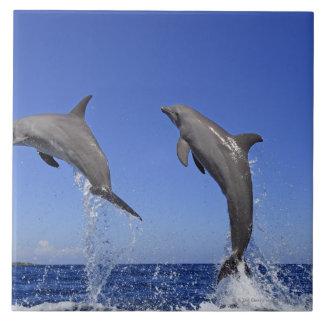 Delfin, Delfim, Tuemmler mais bruto, Tursiops 3