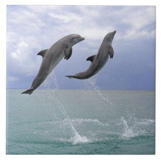 Delfin (Tuemmler mais bruto)