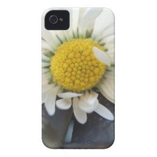 Delicate daisy capinha iPhone 4