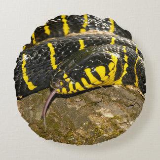 Dendrophila de Boiga ou cobra dos manguezais Almofada Redonda
