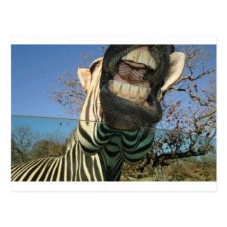Dentes da zebra cartão postal
