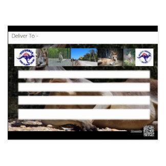 Descobrindo o cartão do canguru de Austrália