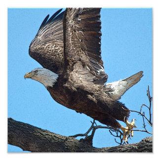 Descolagem da águia americana impressão de foto