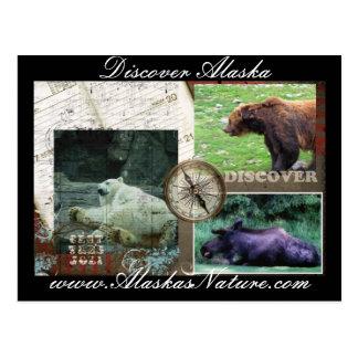 Descubra Alaska Cartão Postal