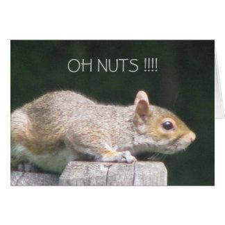Desculpa do aniversário do esquilo cartão comemorativo