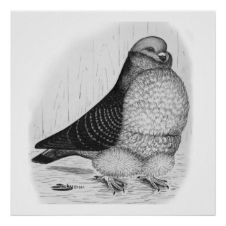 Desenho chinês da tinta da coruja poster