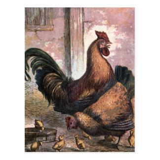 Desenho do vintage: Galo e galinha Cartão Postal