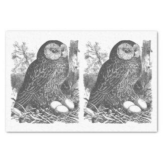 Desenho retro da coruja da ninhada papel de seda
